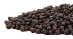 BLACK (BROWN) MUSTARD SEEDS Certified Organic & Kosher Certified 1 OZ