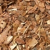 WHITE PINE BARK (1 oz package)